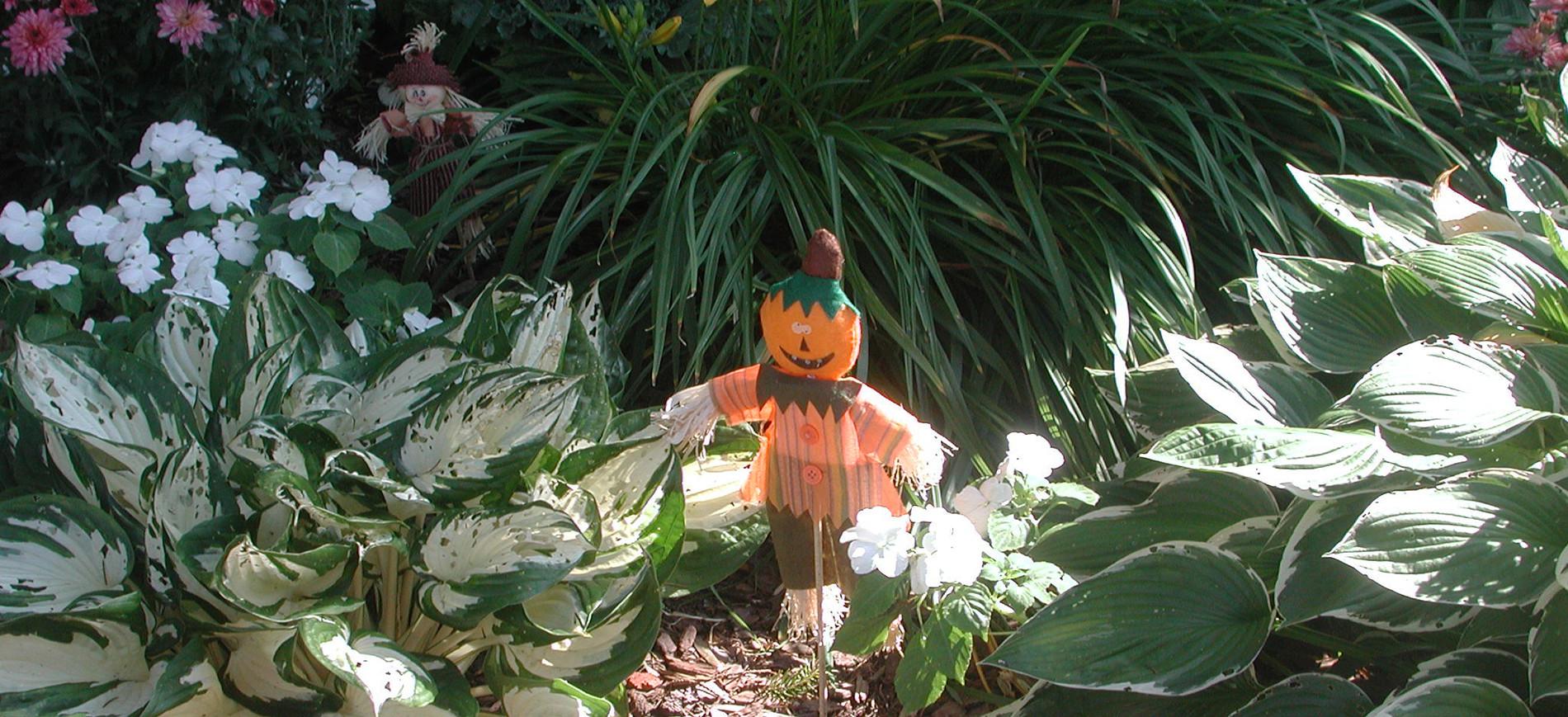 Toy scarecrow in garden with hosta, daylilies