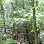 forestsparkling